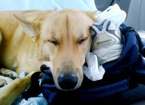 Sleeping on a gym bag