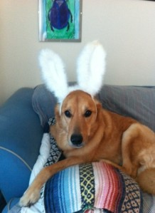 Bunny Pee