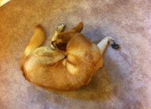pee yoga