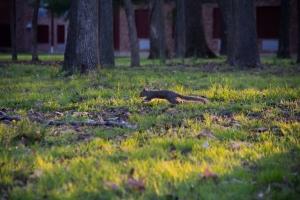 New Squirrel